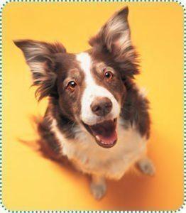 fiche-hygiene-2-chien
