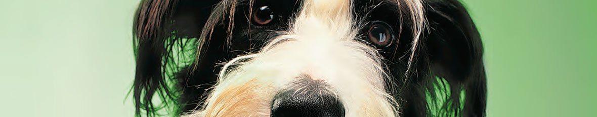 vaccination-chien-bandeau